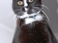 kitty_portrait_3